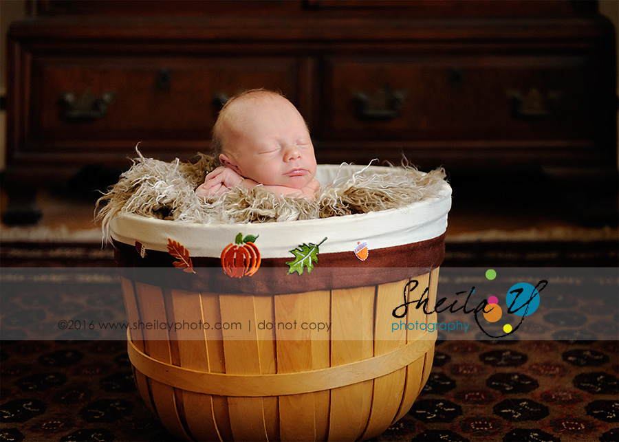 chester county newborn photography
